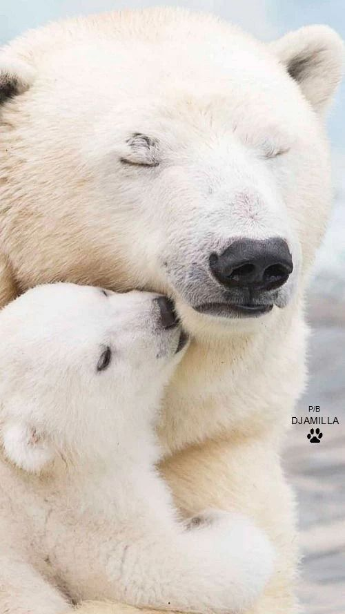 Mommy and Baby Polar Bear