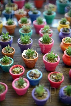 Google Image Result for http://www.featurepics.com/FI/Thumb300/20080314/Miniature-Cactus-Plants-Mexican-Market-652189.jpg