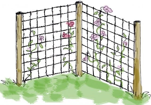 """Spalje av armeringsjärn """"Det vackert rostiga nätet är en perfekt klätterställning och snygg bakgrund till vilka växter som helst. Det bästa för stadgan är att bygga spaljén av två väggar i lätt vinkel. Fäst armeringsnätet med märlor"""""""
