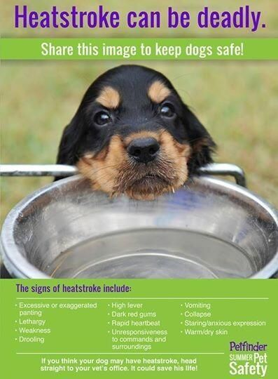 5 Summer Safety Tips for Pet Owners - Heatstroke can be deadly. Know how to recognize the signs and treat it.
