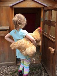 Building a Chicken Coop - Chickens/ as Pets: 5 Kid-Friendly Chicken Breeds Building a chicken coop does not have to be tricky nor does it have to set you back a ton of scratch.