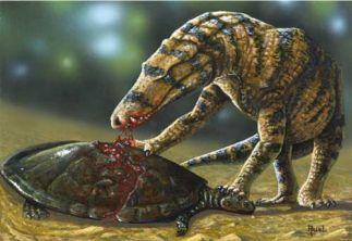 Fóssil de Uberabasuchus terrificus. Local onde viveu: Triângulo mineiro.