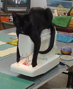 Project Runway Contestant Kitteh has found an alternative use for her sewing machine