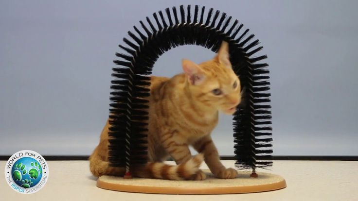Your feline friend will love the Perfect Cat Scratcher!