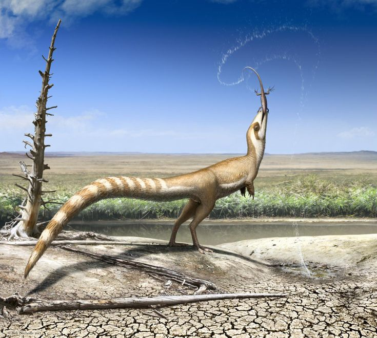 """scinewscom: """" Early Cretaceous Feathered Dinosaur Had 'Bandit Mask' and Striped Tail http://www.sci-news.com/paleontology/sinosauropteryx-prima-bandit-mask-striped-tail-05368.html """""""