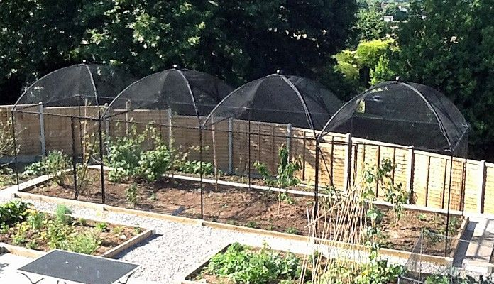 """""""In the cages are: Loganberries, black and red currant bushes, a jostaberry, strawberries, a mulberry bush and a cherry tree. I also put in a few odd cabbage plants that were spare!"""" Fruit Cages Steel Dome and Peak-Customer Gallery http://www.harrodhorticultural.com/fruit-cages-steel-dome-and-peak-pgid1688.html"""