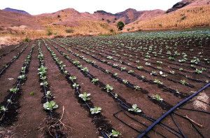 Drip irrigation systems by http://finegardenequipment.com/drip-irrigation/drip-irrigation-supplies/