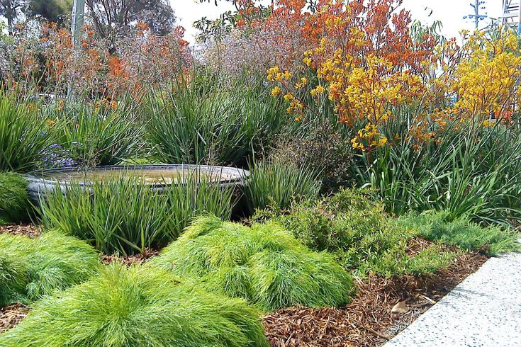 1000  images about australian native gardens on pinterest