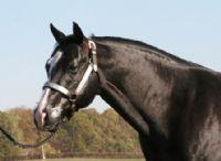 Quarter Horses for Sale, Paint Horses, Reining Horses for sale at Hilldale Farm