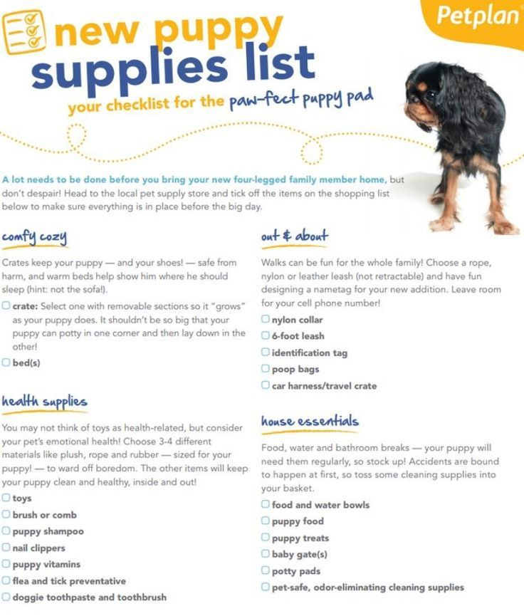 Bringing Home A New Puppy Make Sure You Re Totally Pre Pared With