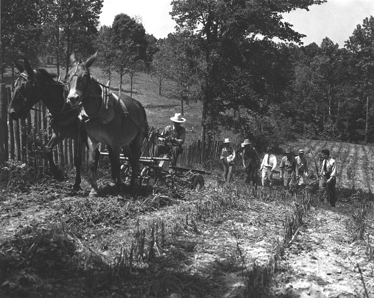 Plowing with a mule team and sowing lespedeza by hand in Humphreys County, Tennessee. 1941: Long Ago, Hand, Sowing Lespedeza, Humphreys County, Tennessee Mules, Mule Team