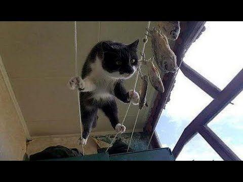 Смешные кошки приколы про кошек и котов 2017 #59 (Видео Приколы прошедши... #смешныекошки #кошки #коты #котята #котенки #приколыскотами #смешныекоты #котприкол #смешноевидео #видеоприколы