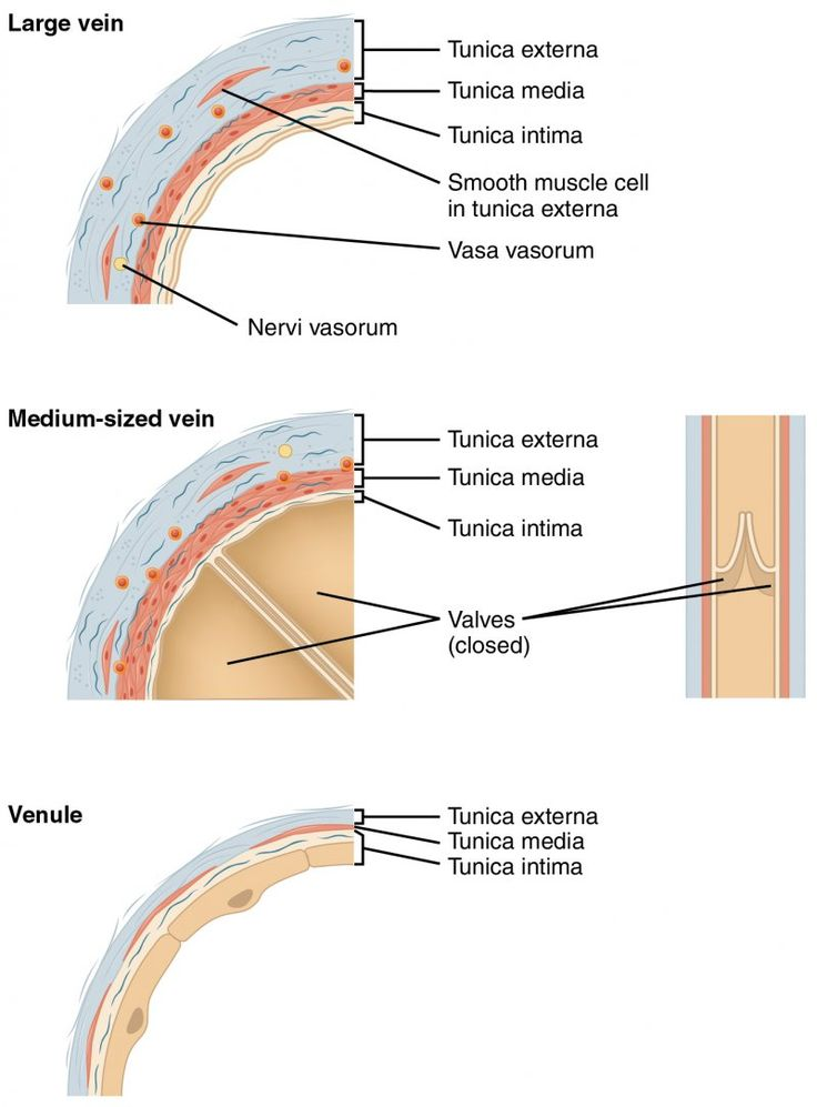 Pin on Vascular Medicine Arteria, Venes, Diseases