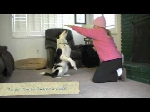 Train your dog to sit up and beg, sit pretty... Pam's Dog Academy www.pamsdogtraining.com Pamela Johnson, San Diego CA Dog Training too!
