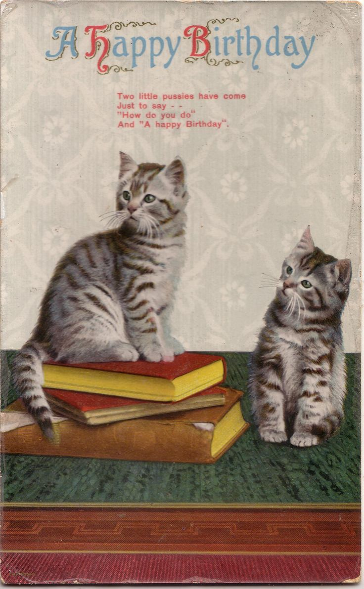 poezenboekenhappybirthday_3326987010_o cats kittens