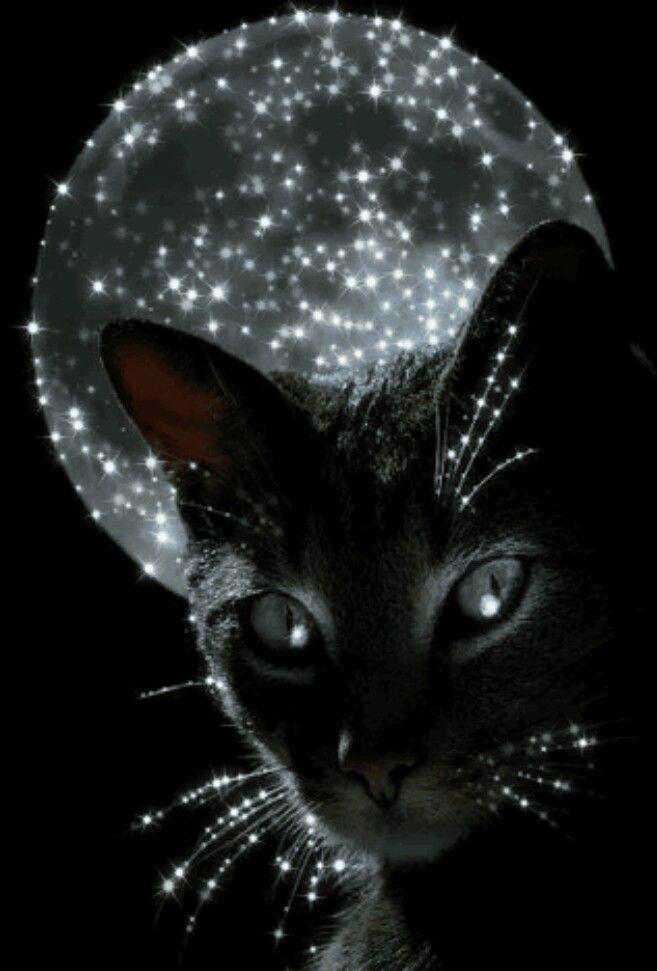 живая картинка кошки кпадушяч ваганович без