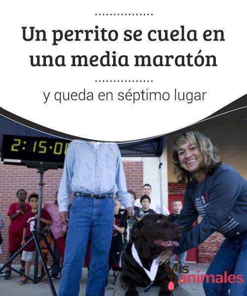 Un #perrito se #cuela en una media #maratón y queda en #séptimo #lugar  Los #perros nunca dejan de #sorprendernos y cada vez nos dan nuevas #historias que #contar. Este es el caso de Ludivine, una perrita que hizo algo #excepcional, ¡se coló en una media maratón! ¿La terminaría? Estamos #seguros de que te #encantará #conocer su #aventura, por eso te la #contamos.
