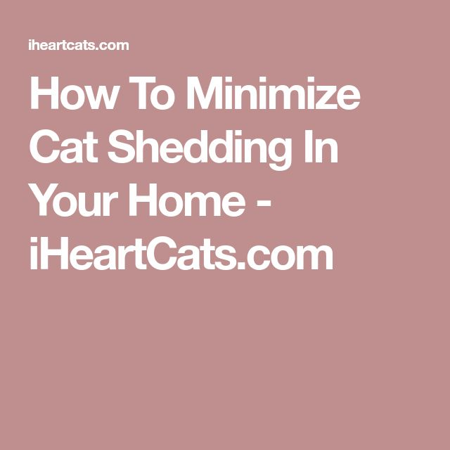 How To Minimize Cat Shedding In Your Home - iHeartCats.com