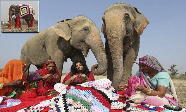 Huge jumpers knitted by villagers to keep elephants warm