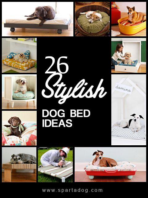 10 best Spartadog Blog images on Pinterest
