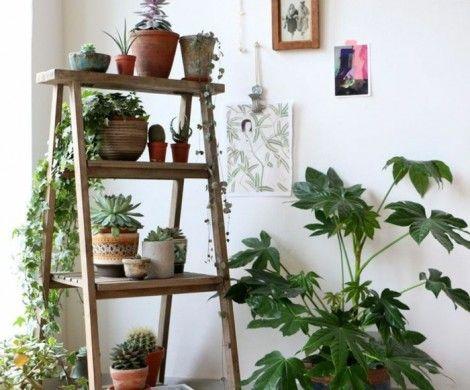 http://alleideen.com/dekoration/07/schattenpflanzen-zimmerpflanzen-schattig.html