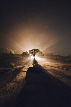 Je ziet hier een licht donker contrast. De zon schijnt achter de boom en op de voorgrond is het donker.