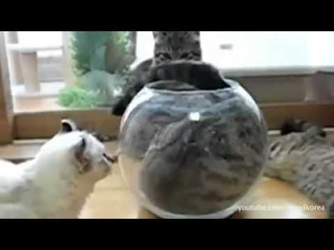If it fits, I sits : The Supercut - YouTube