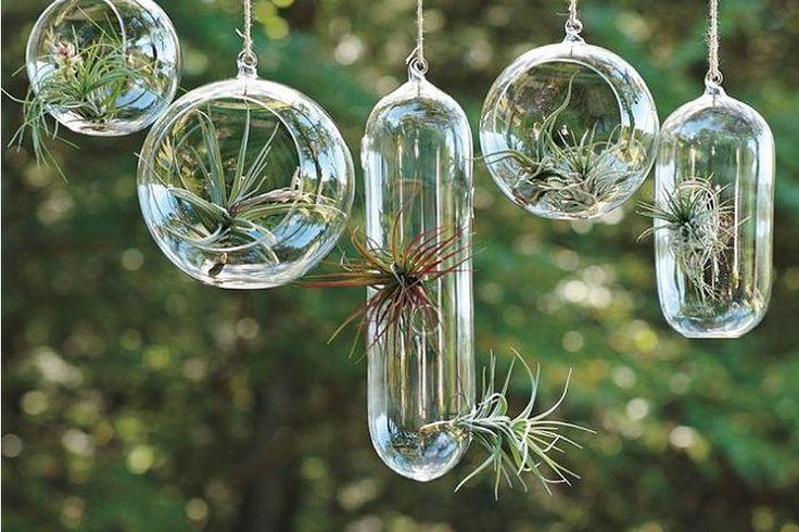 Hangend of staand. Het terrarium is er in vele vormen en maten. Allemaal passend binnen de botanische interieur trend van nu.