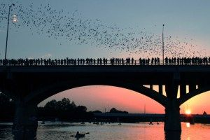 The Million Bats of Austin, TX
