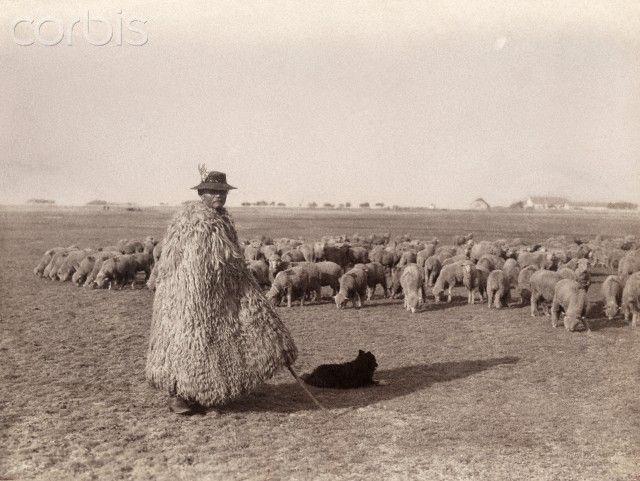 A shepherd in a sheepskin coat tends to a flock of sheep in a field.