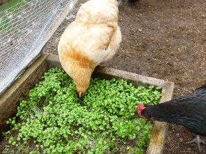 Homemade Chicken Grazing Salad Bar Box Project