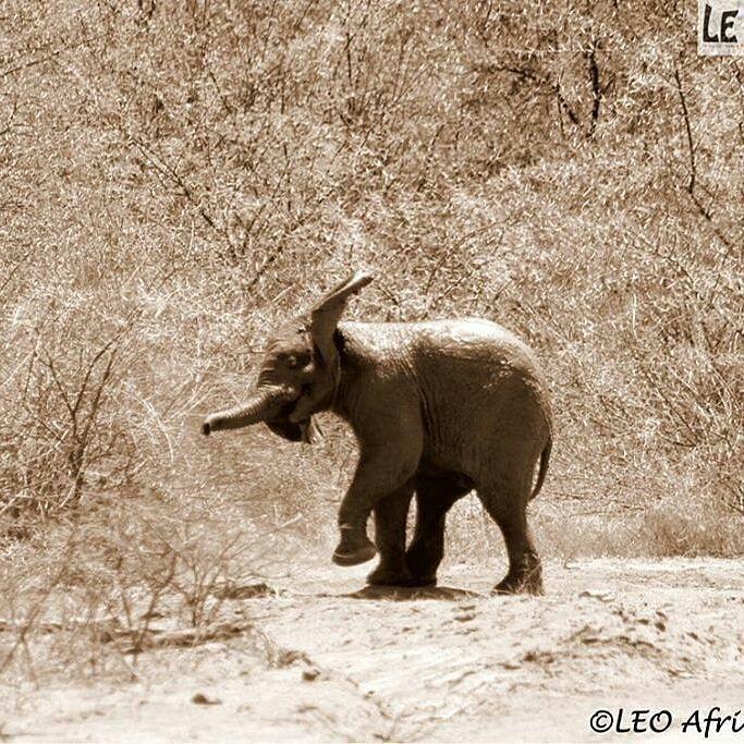 This photo made my day. I love you my baby elephant. Credit : @leo_africa - . #elephant #elephants #elephantlove
