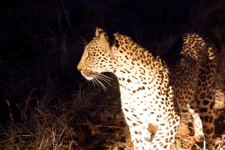 savannah lodge night safari