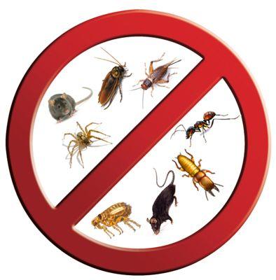 مكافحة الحشرات http://alaamiah.com/blog/spraying-pesticides-w10