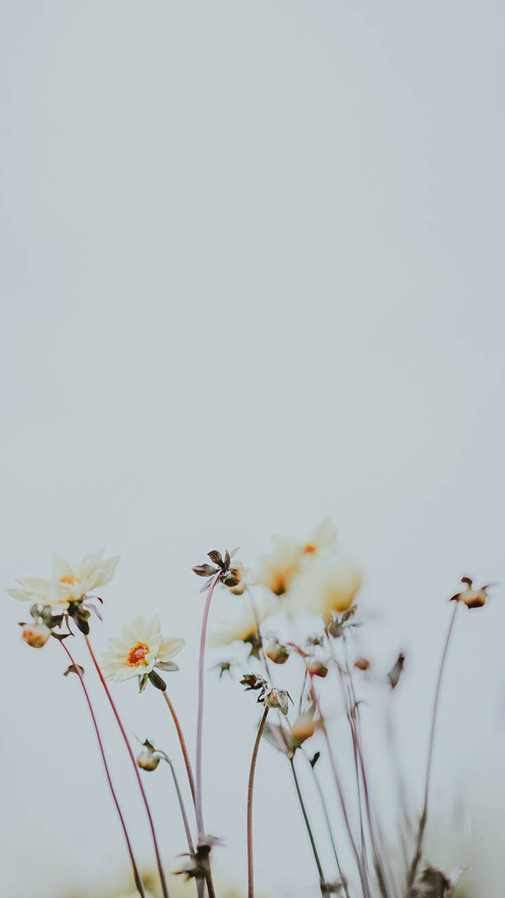 Take A Chill Pill With 10 Mindful Iphone Wallpapers Preppy Wallpapers Chill Wallpaper Nature Iphone Wallpaper Preppy Wallpaper