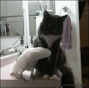 Gif animaux drôles