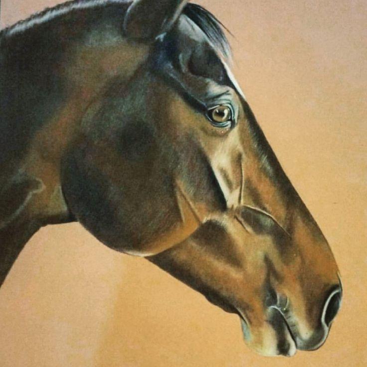 Horse artwork pastel portrait animal commission by Chloe Brown
