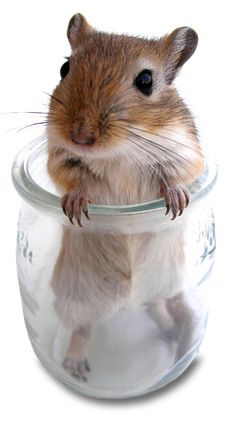 "* * GERBIL: "" I iz notz a product of meez circumstances; I shoulds beez a product of me decisions ! """