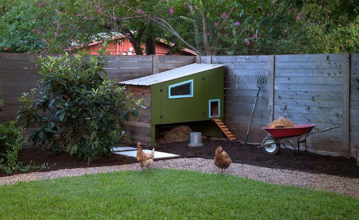Sete passos para come ar a criar galinhas na cidade for Como criar peces ornamentales en casa