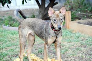 Dog Adoption Events Palo Alto