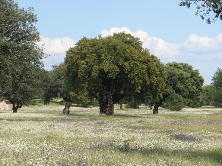 Las dehesas de Toril en Primavera muestran un colorido fantástico y gran exuberancia.