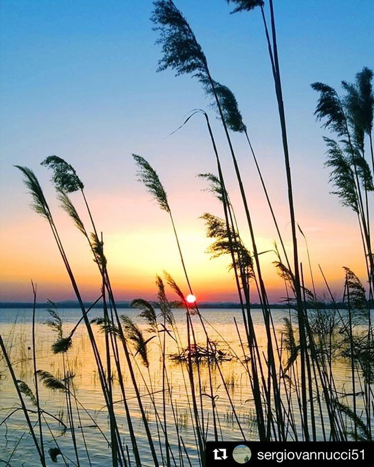 #Repost @sergiovannucci51  #colors #lagotrasimeno2017 #watercolor #lagotrasimeno #umbria_super_pics #naturelovers #volgoitaly #volgoitalia #tuorosultrasimeno #italy #volgoumbria #trasimeno #trasimenolake #nokialumia925 #nature #sunset #landscapelover #umbria #picture #amazing #yallersumbria