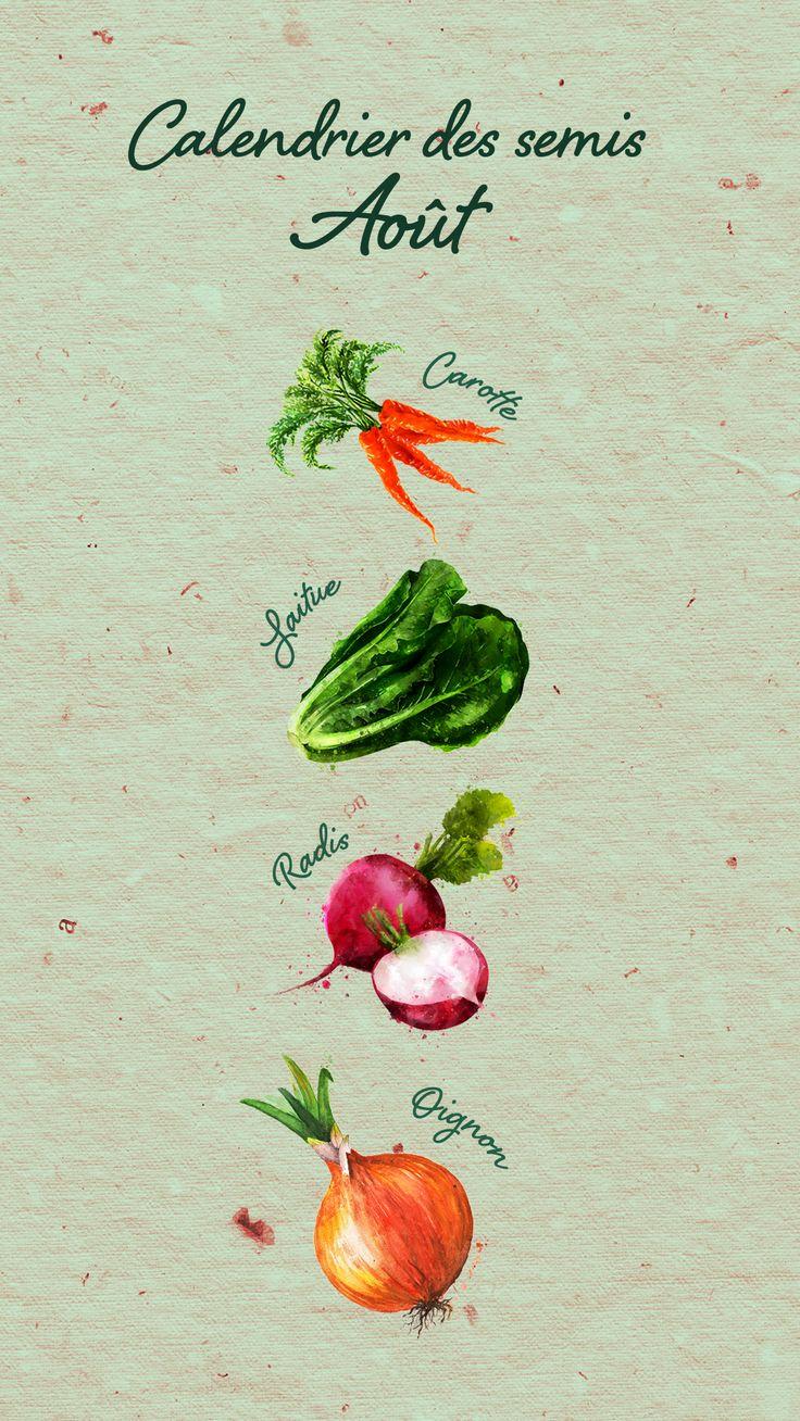 Au potager Semez en place arroche, carotte, cerfeuil
