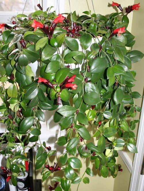 Best Vertical Garden Plants With Care Tips