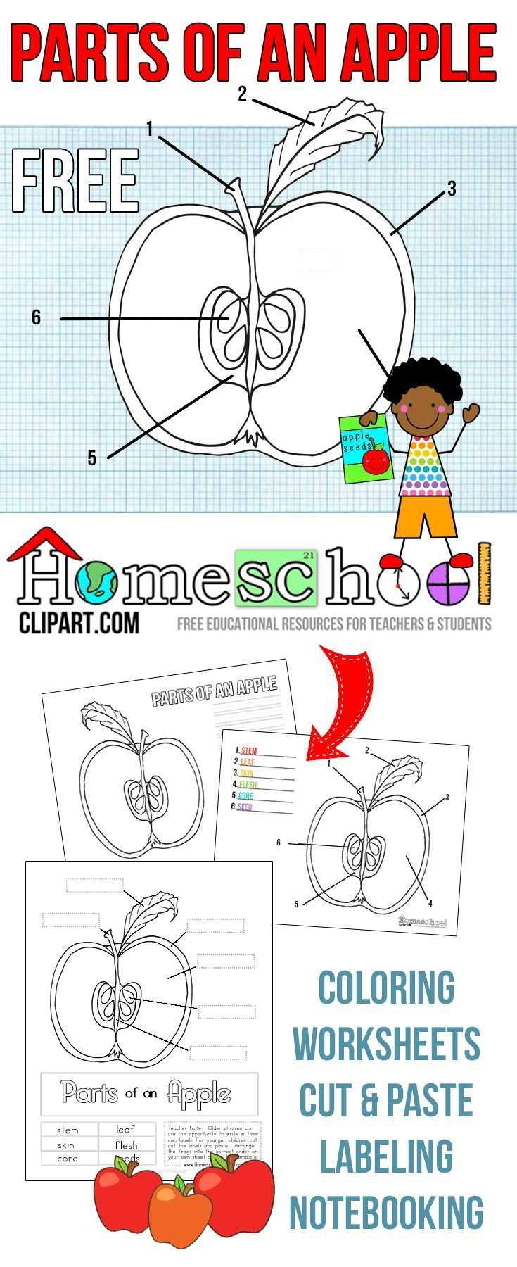 Free Parts of an Apple Activity Worksheets! This set includes coloring,  notebooking, labeling