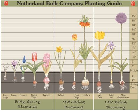 Tips for Planting Fall Bulbs Traditional Home Planting
