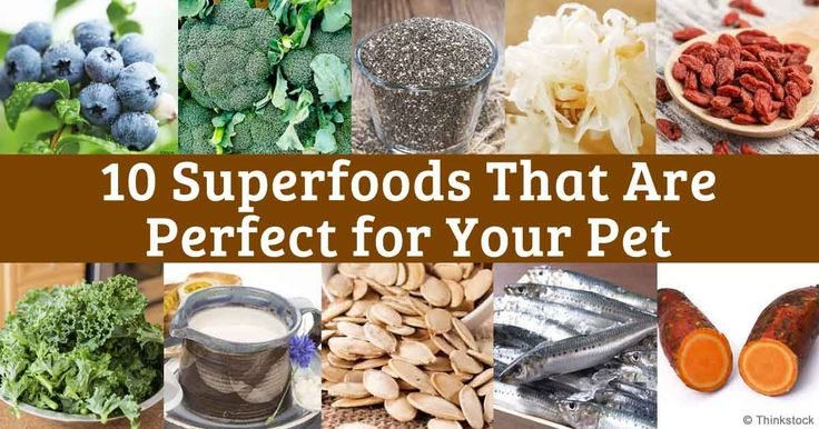 10 Human Superfoods Perfect for Sharing with Your Pet..this pin also contains a recipe for making your own kefir milk!