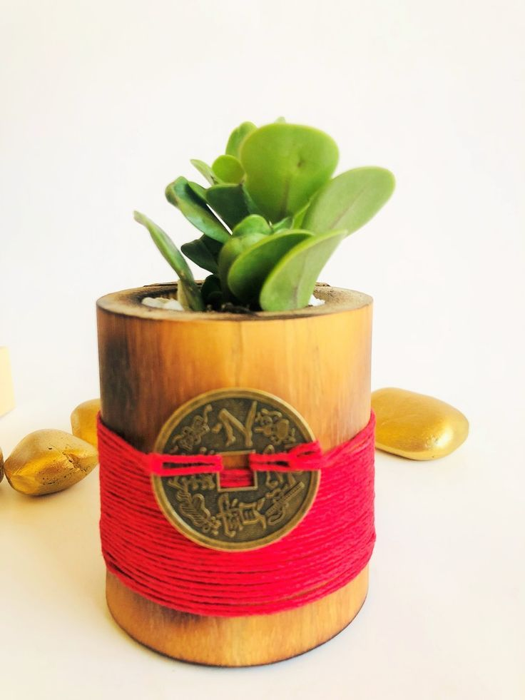 Money Plant in Red signify Luck, Energy & Determination – Garden Delights