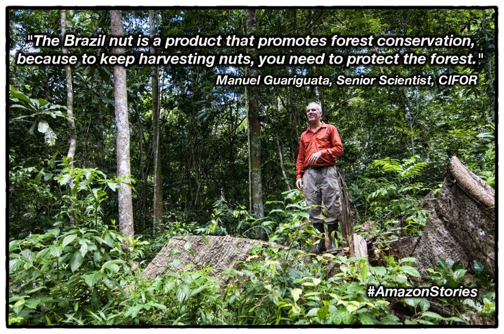 Good question: Can you produce #Brazilnuts and harvest #timber at the same time? #AmazonStories
