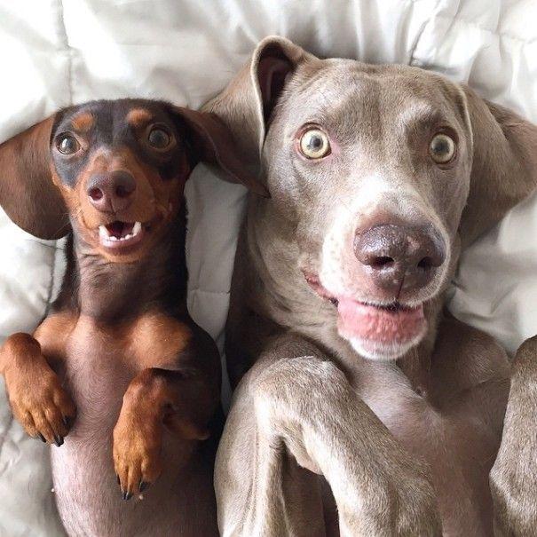 harlow-sage-indiana-reese-cute-dog-photos